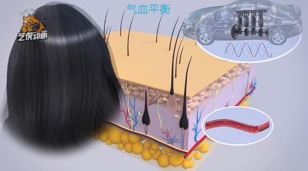 三维医学动画